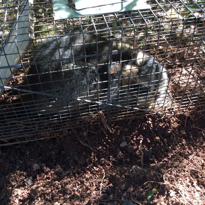 Wildlife Removal in Houston TX