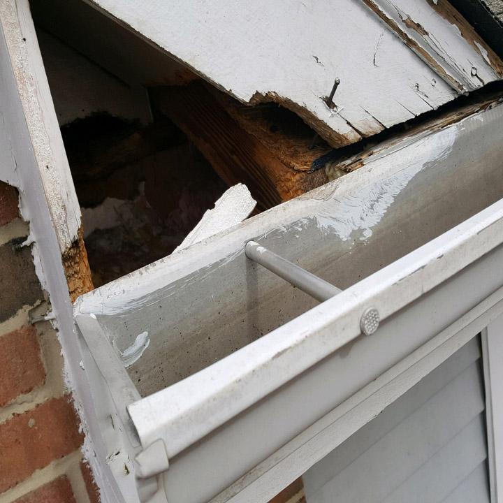 Repair raccoon damage in Houston